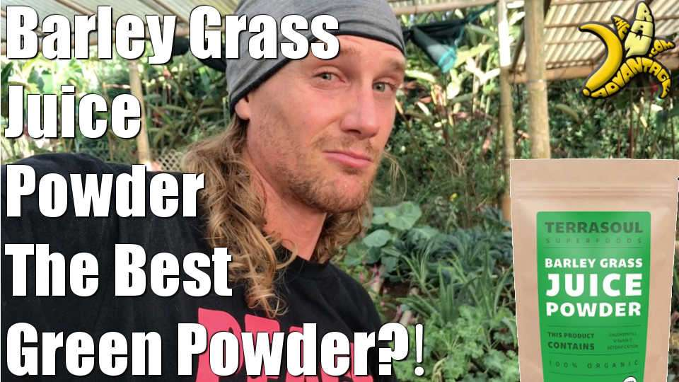 Barley Grass Juice Powder | The Best Green Powder?!
