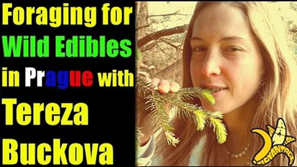 Foraging for wild edibles in Prague With Tereza Buckova
