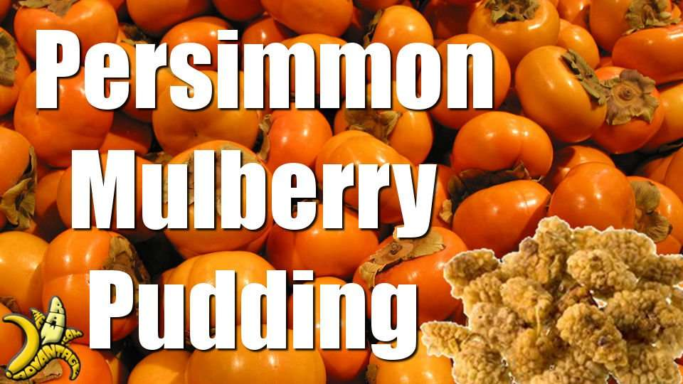 "TRA's Best Fall Raw Recipe.. Persimmon Mulberry ""Oatmeal"""