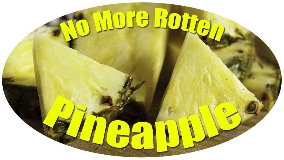 Have You Been Storing Your Pineapples Wrong!?