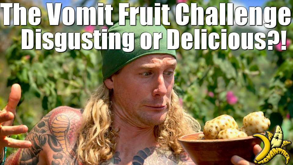 The Vomit Fruit / Noni Challenge, Disgusting or Delicious?!