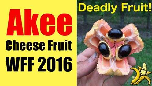 Ackee, Cheese Fruit at WFF 2016