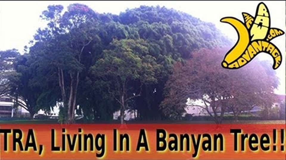 TRA Hawaiian Adventure #3, Living in a Banyan Tree!